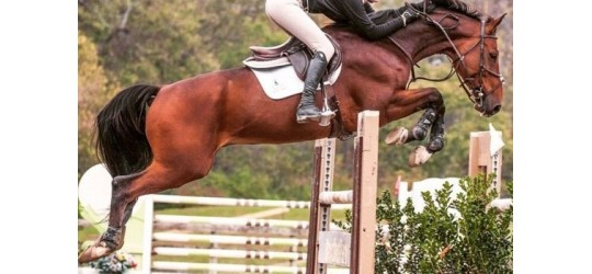 Textile du cheval